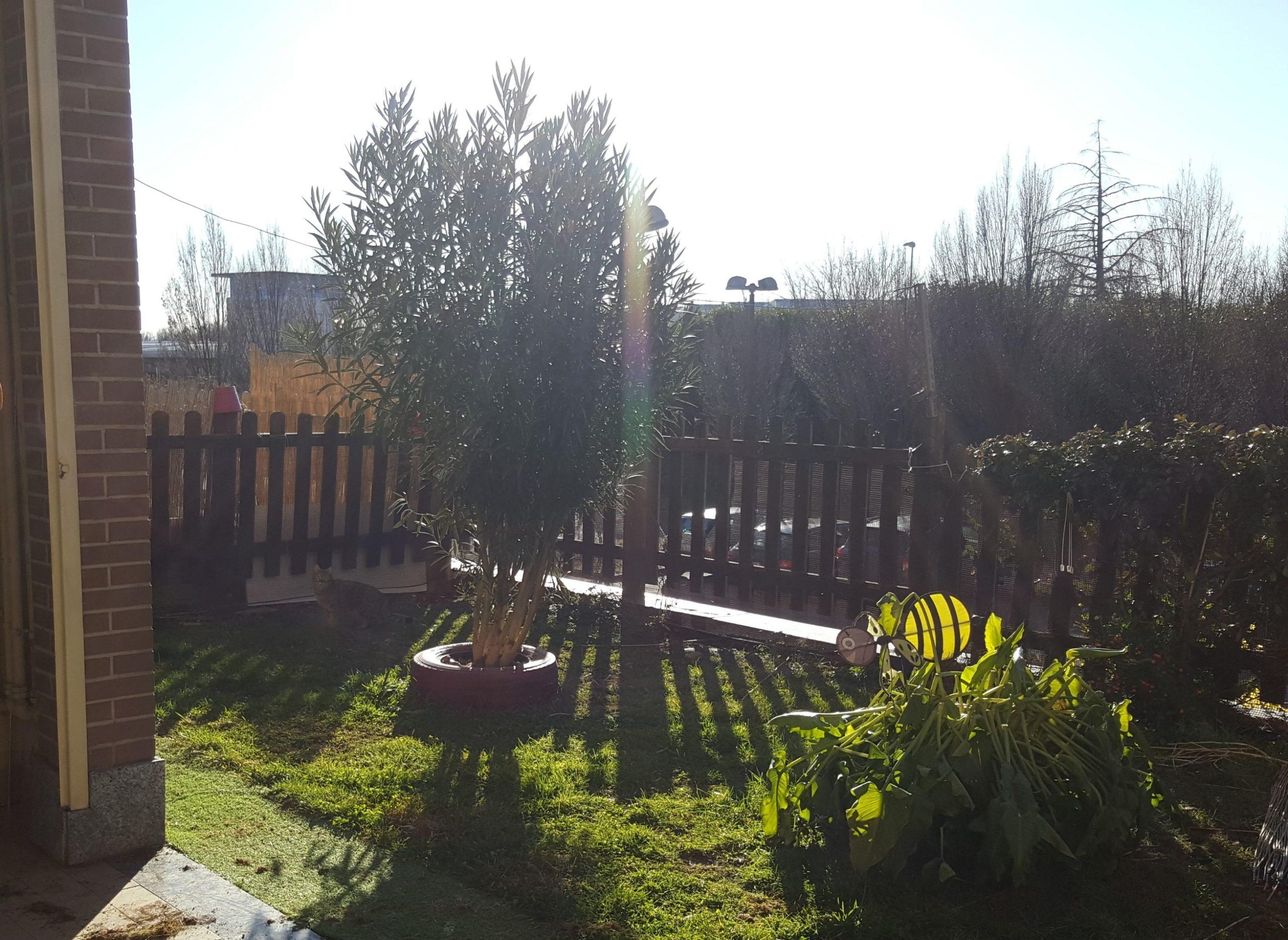 Fagnano Olona in affitto bilocale con giardino privato